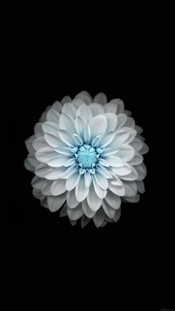 papers.co-ac92-wallpaper-apple-iphone6-plus-ios8-flower-blue-33-iphone6-wallpaper