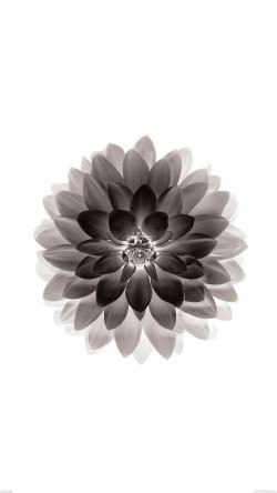 papers.co-ad42-apple-black-lotus-iphone6-plus-ios8-flower-33-iphone6-wallpaper