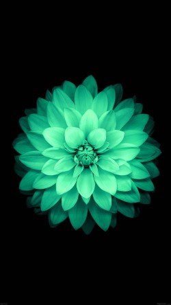 papers.co-ad76-apple-green-lotus-iphone6-plus-ios8-flower-33-iphone6-wallpaper