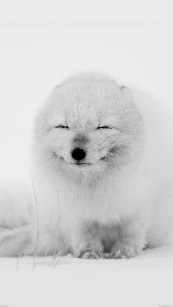 papers.co-af02-arctic-fox-happy-moment-33-iphone6-wallpaper