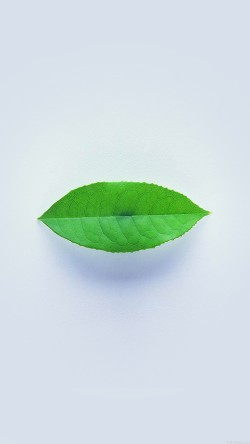 papers.co-ah89-green-leaf-minimal-nature-art-33-iphone6-wallpaper