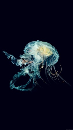 papers.co-al43-apple-watch-wallpaper-jellyfish-art-nature-blue-33-iphone6-wallpaper