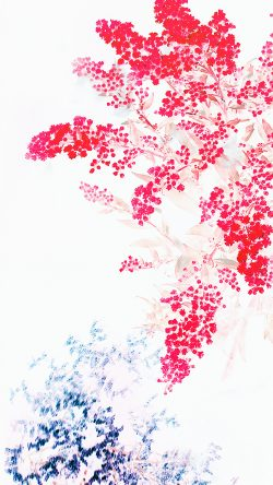 papers.co-an60-apple-red-white-flower-ios9-iphone6s-33-iphone6-wallpaper