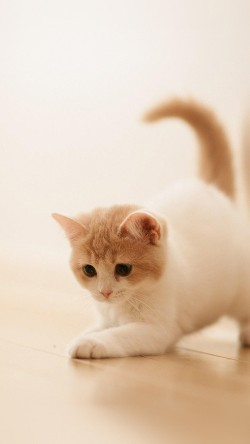 papers.co-ap58-cute-cat-kitten-animal-33-iphone6-wallpaper