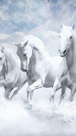 papers.co-au21-white-horses-water-sky-illustration-art-33-iphone6-wallpaper