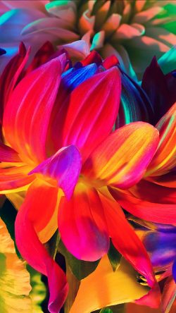 papers.co-au85-apple-mackbook-flower-rainbow-color-illustration-art-nature-33-iphone6-wallpaper