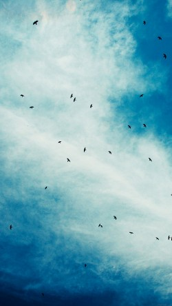 papers.co-ma14-blue-birds-sky-animal-nature-33-iphone6-wallpaper