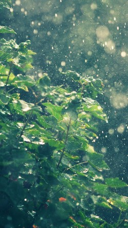 papers.co-ma56-raining-summer-sunny-flower-nature-33-iphone6-wallpaper