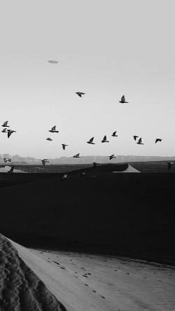 papers.co-mb31-wallpaper-flights-of-birds-desert-33-iphone6-wallpaper
