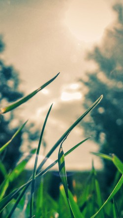 papers.co-mb36-wallpaper-grass-sunshine-leaf-nature-33-iphone6-wallpaper