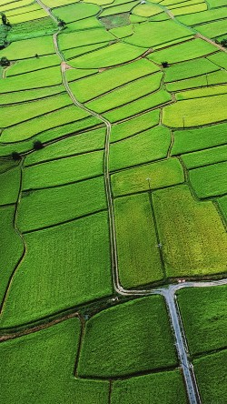 papers.co-mb57-wallpaper-rice-paddy-field-nature-33-iphone6-wallpaper