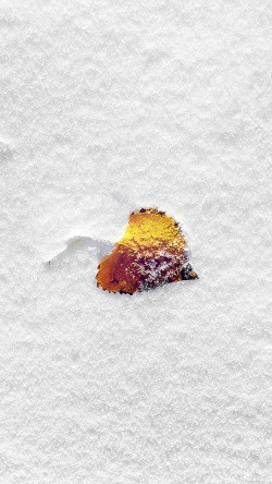 papers.co-mb62-wallpaper-boo-201-snow-leaf-33-iphone6-wallpaper