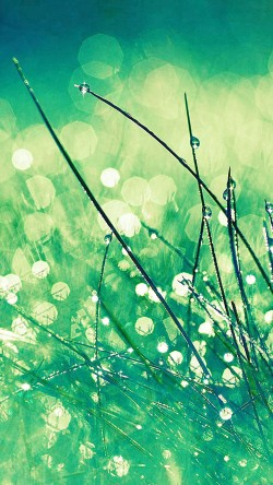 papers.co-mc02-wallpaper-grass-dew-greener-leaf-33-iphone6-wallpaper