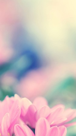 papers.co-mc22-wallpaper-boo-184-flower-pink-blurred-33-iphone6-wallpaper