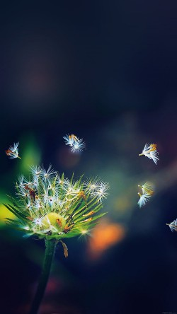 papers.co-mc82-wallpaper-blowing-dandelion-flower-33-iphone6-wallpaper