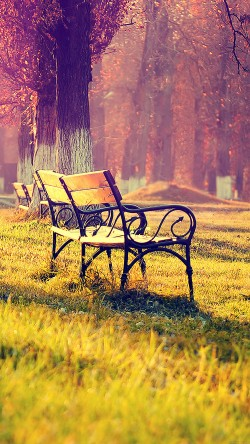 papers.co-md15-wallpaper-fall-park-chair-lonely-nature-33-iphone6-wallpaper