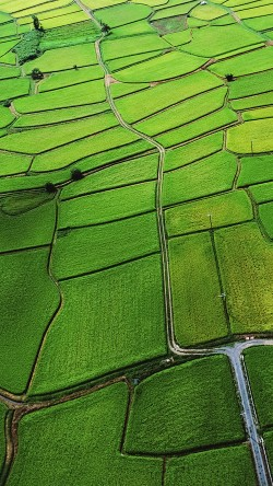 papers.co-md26-wallpaper-green-from-sky-aerial-33-iphone6-wallpaper