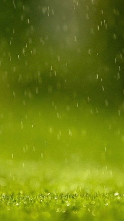 papers.co-md37-wallpaper-green-rain-nature-33-iphone6-wallpaper