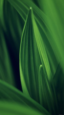 papers.co-md76-leaf-nature-green-33-iphone6-wallpaper
