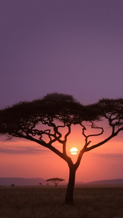 papers.co-mf03-solo-tree-safari-africa-sunset-33-iphone6-wallpaper
