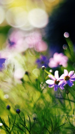 papers.co-mf32-flower-bokeh-spring-days-delicious-33-iphone6-wallpaper