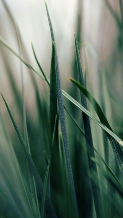 papers.co-mf52-grass-world-garden-leaf-nature-33-iphone6-wallpaper