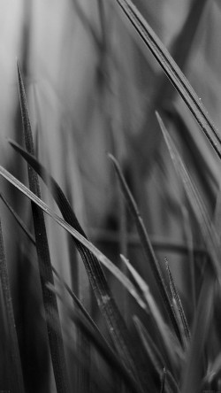 papers.co-mf54-grass-dark-bw-world-garden-leaf-nature-33-iphone6-wallpaper