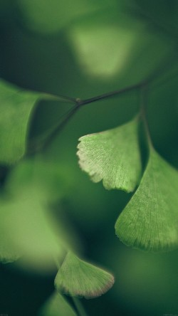 papers.co-mf56-good-luck-clovers-leaf-nature-33-iphone6-wallpaper