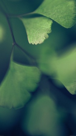 papers.co-mf57-good-luck-blue-clovers-leaf-nature-33-iphone6-wallpaper