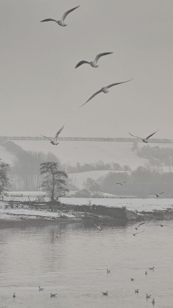 papers.co-mg66-fly-birds-snowy-river-winter-lake-nature-33-iphone6-wallpaper