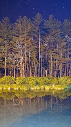 papers.co-mg67-night-wood-with-lake-nature-33-iphone6-wallpaper