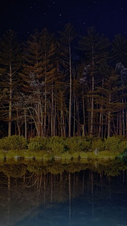 papers.co-mg68-night-dark-wood-with-lake-nature-33-iphone6-wallpaper