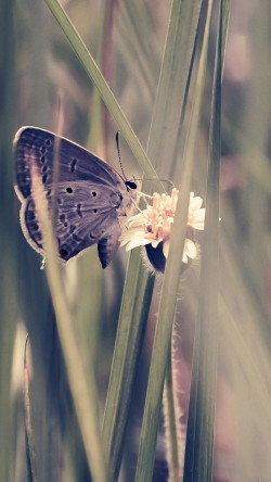 papers.co-mg73-butterfly-eating-time-blue-nature-33-iphone6-wallpaper