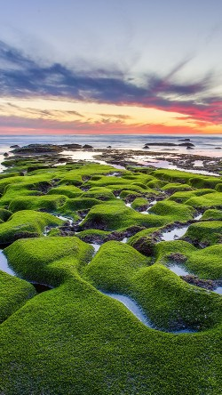 papers.co-mg77-la-jolla-green-shore-wallpaper-sea-33-iphone6-wallpaper