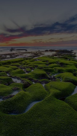 papers.co-mg78-la-jolla-green-dark-shore-wallpaper-sea-33-iphone6-wallpaper