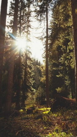 papers.co-mi93-mountain-sunlight-marco-jorger-nature-33-iphone6-wallpaper