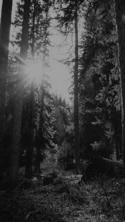 papers.co-mi95-mountain-sunlight-bw-marco-jorger-nature-33-iphone6-wallpaper