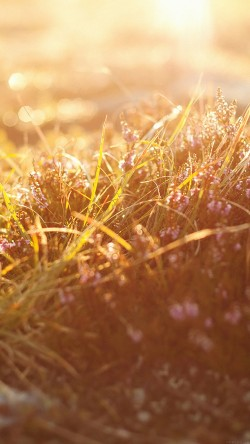 papers.co-mj39-sun-rise-flower-grass-love-nature-33-iphone6-wallpaper
