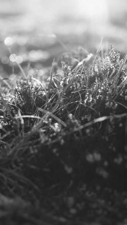 papers.co-mj41-sun-rise-green-leaf-bw-flower-grass-love-nature-33-iphone6-wallpaper