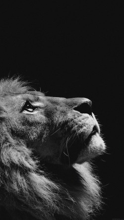 papers.co-mj50-lion-looking-sky-animal-nature-dark-photo-33-iphone6-wallpaper