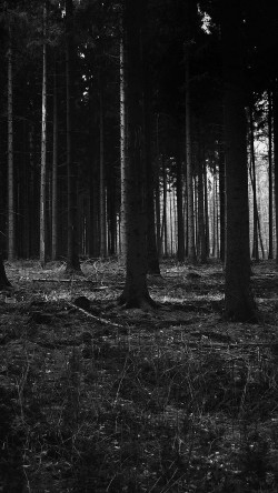 papers.co-mj53-forest-dark-scary-night-trees-nature-33-iphone6-wallpaper