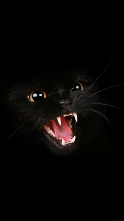 papers.co-mj54-black-cat-roar-animal-cute-33-iphone6-wallpaper
