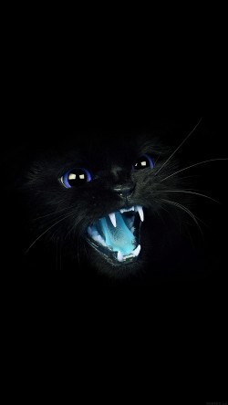 papers.co-mj55-black-cat-blue-eye-roar-animal-cute-33-iphone6-wallpaper