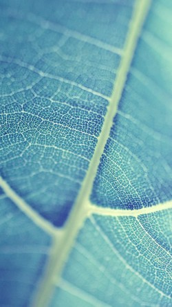 papers.co-mj84-leaf-bokeh-blue-nature-33-iphone6-wallpaper