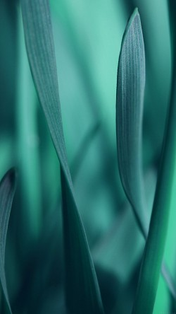 papers.co-mj95-leaf-grass-blue-bokeh-nature-33-iphone6-wallpaper