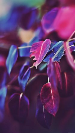 papers.co-mk01-fall-leaf-flower-bokeh-nature-33-iphone6-wallpaper