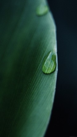 papers.co-mk06-leaf-raindrop-green-nature-33-iphone6-wallpaper