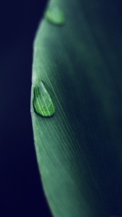 papers.co-mk07-leaf-raindrop-blue-nature-33-iphone6-wallpaper