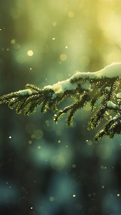 papers.co-mk27-snowing-tree-winter-nature-mountain-33-iphone6-wallpaper
