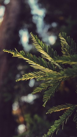 papers.co-mk43-tree-winter-light-bokeh-life-mountain-nature-33-iphone6-wallpaper